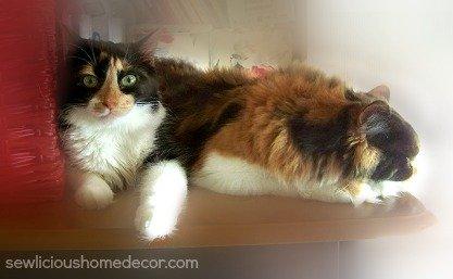craft kitties