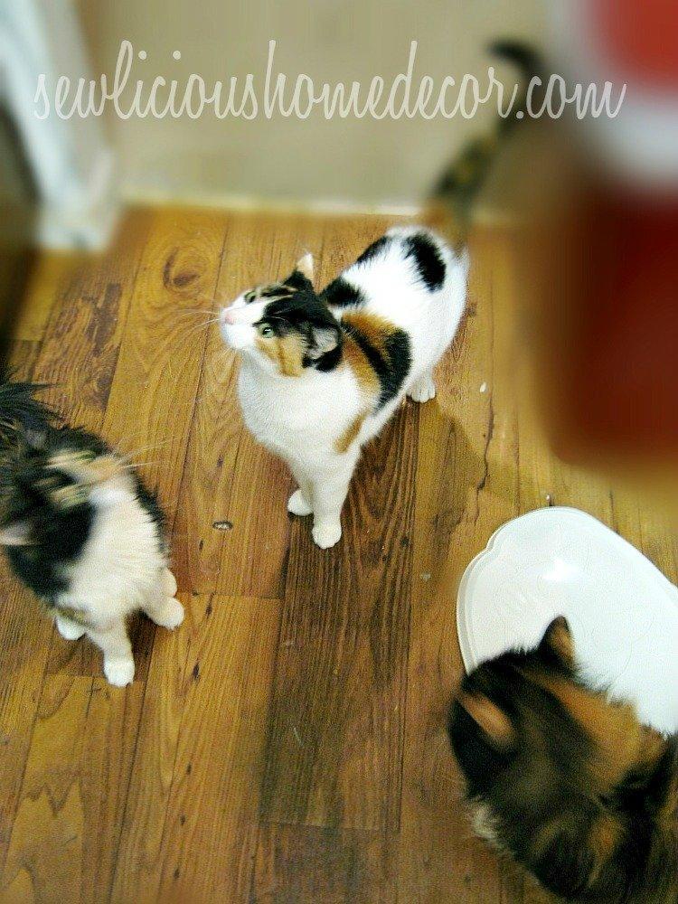 How to spoil cats at sewlicioushomedecor.com