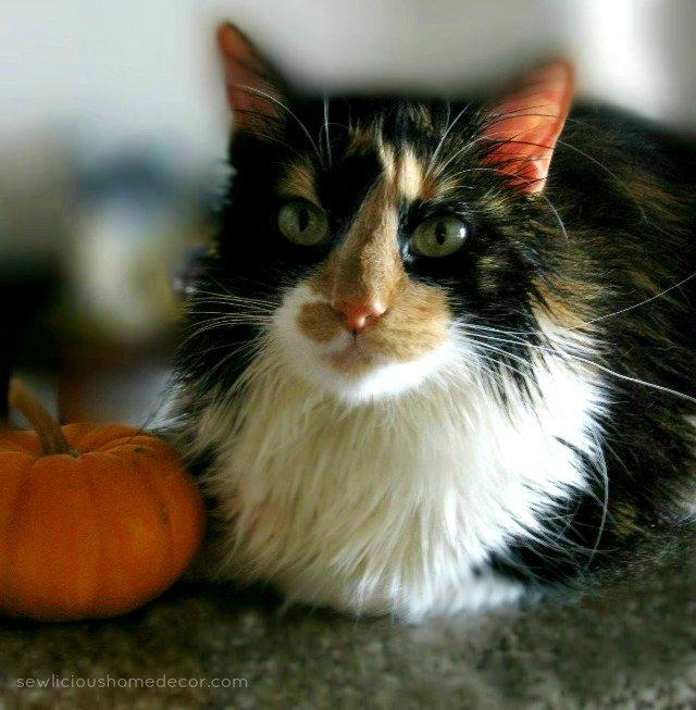 fall pumpkin kitty