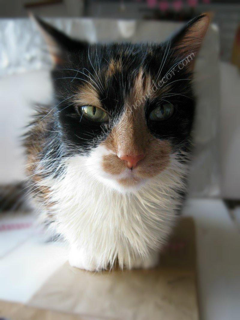 kitty crafts at sewlicioushomedecor.com